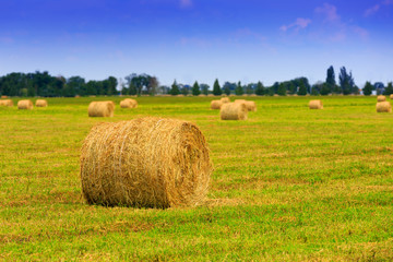 hay rolls on meadow at autumn time