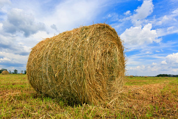 Hay rolls on meadow