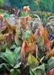 canvas print picture - Pflanzen im Garten