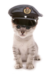 Kitten wearing RAF pilots hat