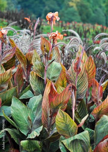 canvas print picture Pflanzen im Garten