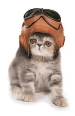 kitten wearing vintage raf helmet and googles