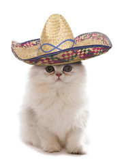 Kitten wearing a sombrero