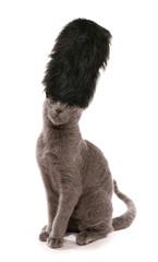 kitten wearing London guards bearskin hat