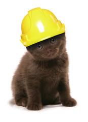kitten wearing a yellow builders hard hat studio cutout
