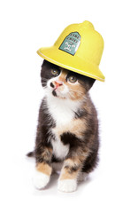 kitten wearing a firemans helmet studio cutout