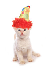 Balinese Kitten wearing a clown hat studio cutout