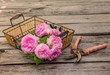 Bouquet of wild rose on basket next to the gardening shears