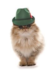 persian cat wearing bavarian beer festival hat
