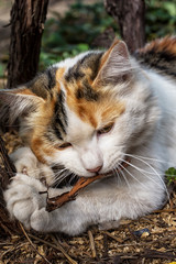 playful cat gnawing the bark of the tree