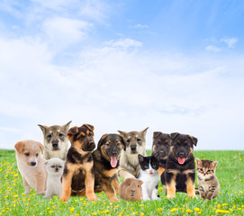 Pets are sitting on the green lawn on a background of blue sky
