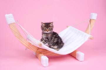 Katzenbaby auf der Hängematte