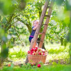 Beautiful little girl in an apple garden