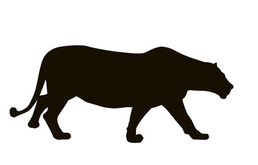 Female lion hunting. Vector  silhouette. EPS 8