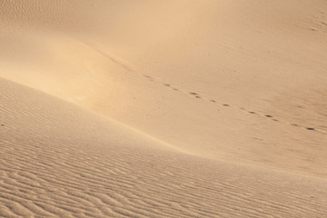 Footsteps in the desert. Mesquito dunes, Death Valley