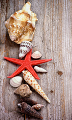 Conch Shells and Starfish