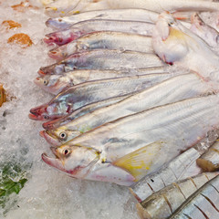 fresh fish on ice at the market in Thailand