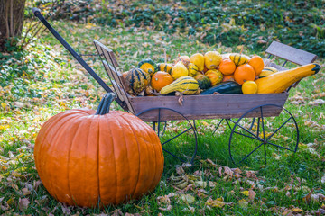 Fall Pumpkin and Gourds
