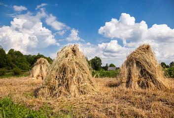 Rural summer landscape in sunny day