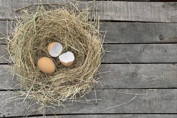 Egg and broken eggshell in nest on gray background