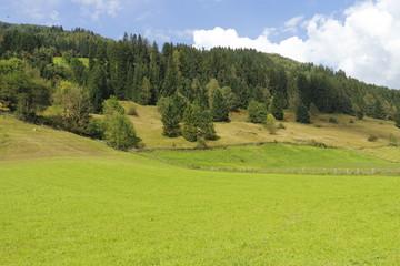 almwiese vor baumgrenze, koppel wiese in salzburg