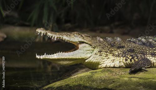 In de dag Krokodil Wild Life
