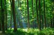 green forest - 69959397
