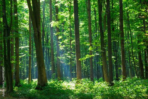 Aluminium Bossen green forest