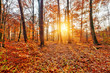 canvas print picture - Sunlighted autumn forest