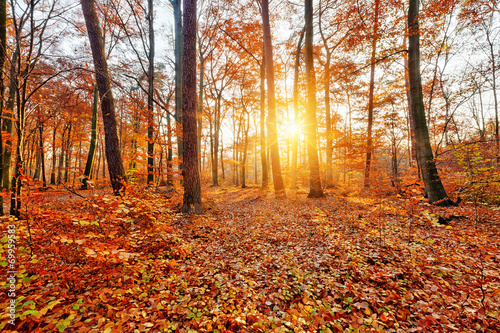 canvas print picture Sunlighted autumn forest