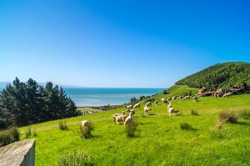 Schafherde auf grüner Wiese