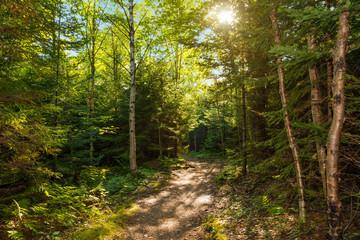 Dickson Falls Trail Path