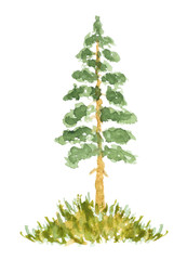 Watercolor Fir Tree, Hand Drawn and Painted, Isolated on White