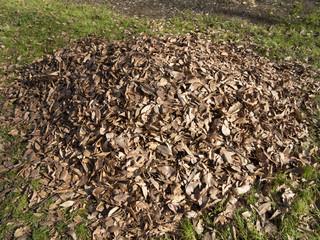 掃き寄せた落葉の山