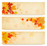 Fototapety Three abstract autumn banners with color leaves. Vector