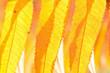 Sonnige Blätter im Wald