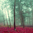 Mystic color forest