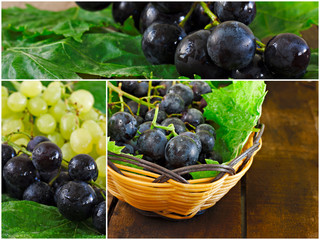 Collage of green and black grapes