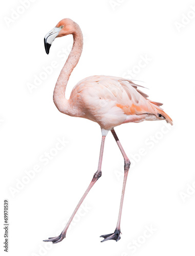 Tuinposter Flamingo pink flamingo. Isolated over white