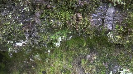 mousse dans la forêt