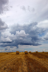Harvested wheat field with hay rolls on the background of a stor