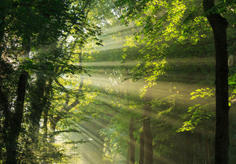 Sunlight breaking through the trees.