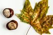 canvas print picture - Kastanien mit Herbst Blatt