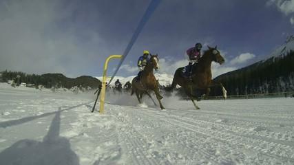 gara di cavalli sulla neve