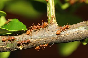 group ant walking on tree