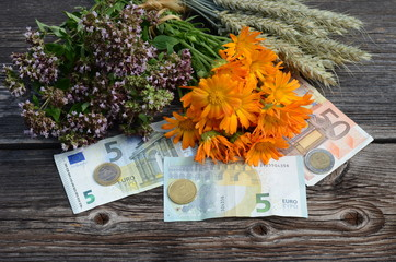 euro money and medical herbs with wheat ears