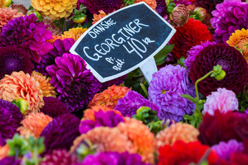bouquets of dahlias flowers at market in Copenhagen,Denmark