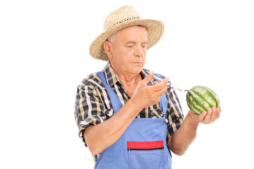 Mature farmer injecting chemicals into watermelon