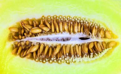 Yellow melon seeds closeup
