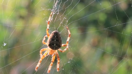 Spider In Web Waiting For Prey